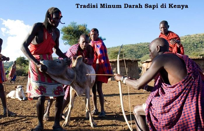 Tradisi minum darah sapi di Kenya